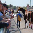 horse-racing-1692364_1280